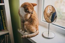 Cat in a mirror