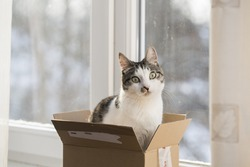 Cat in a postal box, by the window