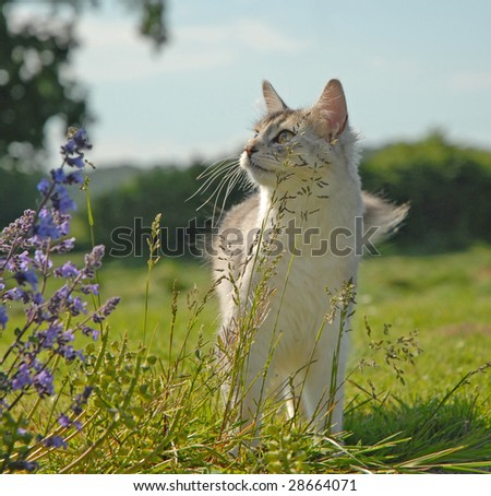 cat in a rural setting