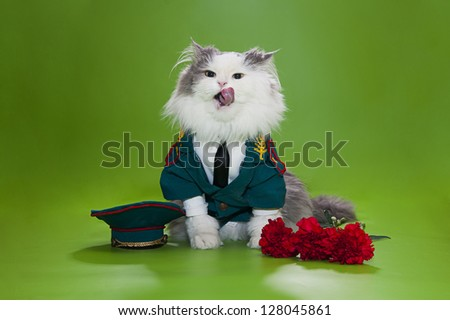 Cat in a suit on an isolated background of general