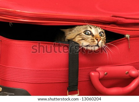 stock photo : Cat in a suitcase