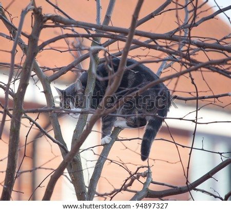 Cat in a tree