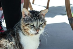 Cat in Antalya, Turkey. A stray, scowling cat. Street cat in Antalya. The theme of homeless animals. A stray, stray, street cat with green eyes and a long mustache sits and looks in front of him.