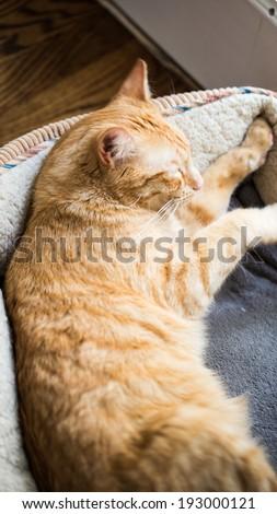 Cat in Cat Bed