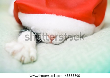 cat in christmas the Santa's hat