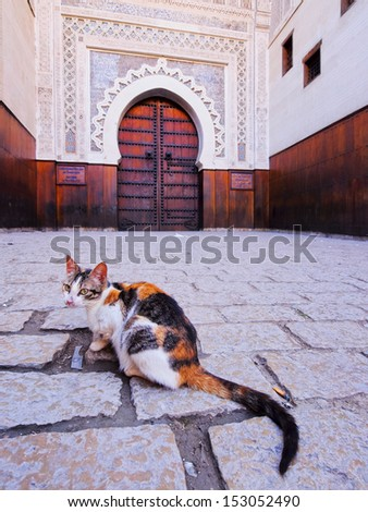 Cat in front of a typical moroccan door in the old medina of Fes, Morocco, Africa