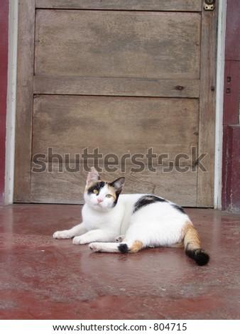 Cat in front of door
