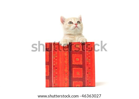 cat in gift box