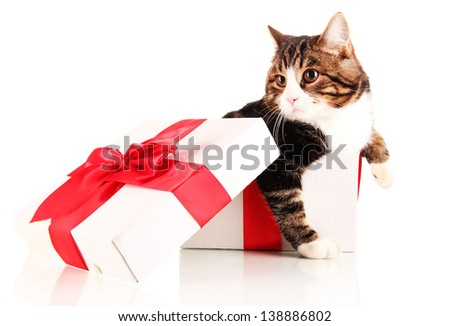 cat in gift box isolated on white
