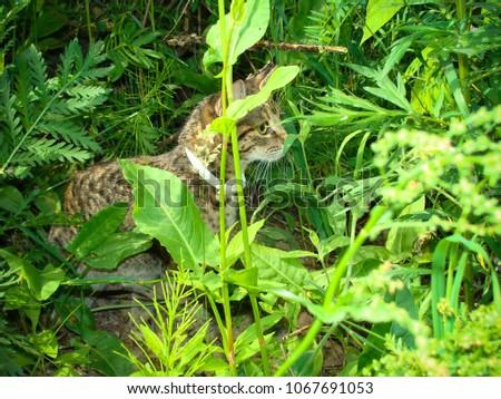 Cat in green grass