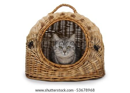 Cat in handbasket on white background.