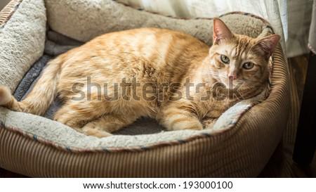 Cat in His Cat Bed