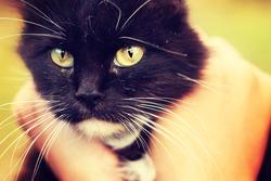 cat in human hands