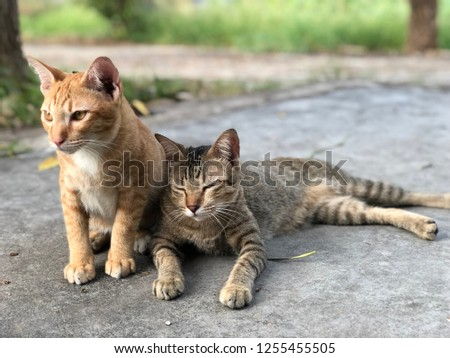 Cat in love, Cute cats is sitting together on the floor, orang cat, tiger cat #1255455505
