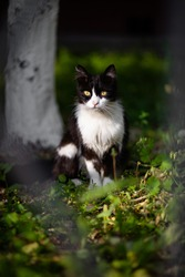 Cat in nature. City cats. Kitty. Nature green. Big eyes. Catching moment. Portrait of cat