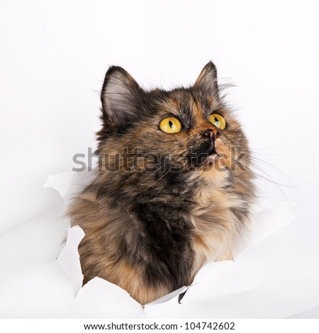 cat in paper side torn hole isolated on white