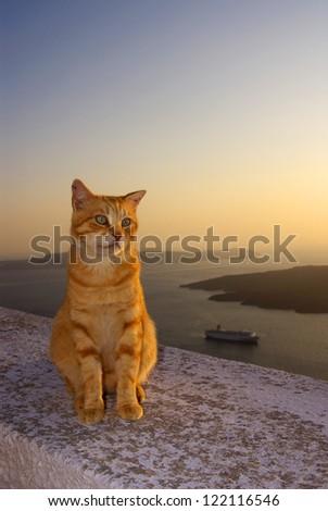 Cat in Santorini, Greece