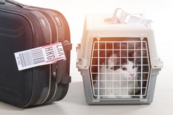 Cat in the airline cargo pet carrier waiting at the airport after a long journey