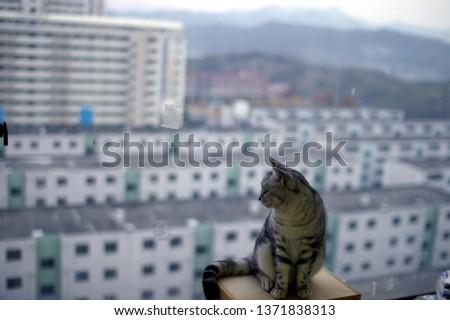 cat in the apartment