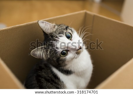 Stock Photo cat in the box