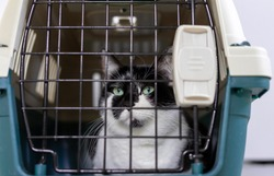 Cat in the cage. cat in a transport box.