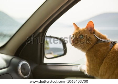 Cat in the car. Traveling with a pet
