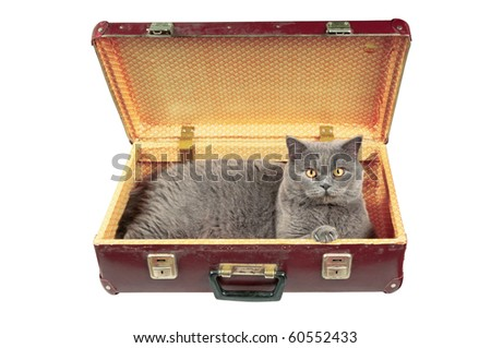 Cat in the old vintage suitcase. Isolated on white.
