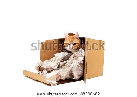 cat in toppled box