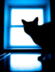 Cat in Window Silhouette Neon Light Glow