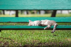 Cat is a animal type mammal and pet so cute gray color sleeping for relax on a outdoor green wooden chair at park with green nature