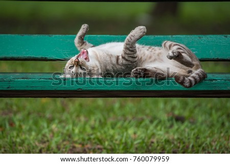 Cat is a animal type mammal and pet so cute gray color sleeping for relax on a outdoor green wooden chair at park with green nature #760079959