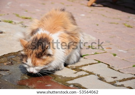 what is the best litter to use for kittens