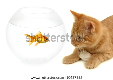 Cat is looking at a goldfish in a fish bowl - stock photo