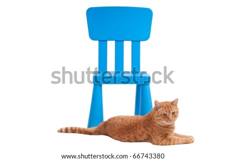 Cat is lying in front of a chair