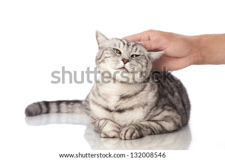 Cat is petted