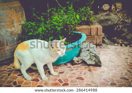 cat isolated animal cute vintage tone pet background portrait cats pet