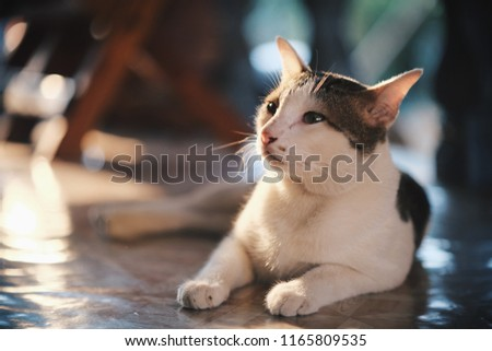 Cat isolated in house #1165809535