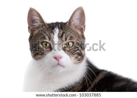 Cat isolated on white