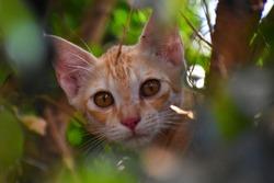 CAT KITTEN CATLOOK CUTECAT CATEYES
