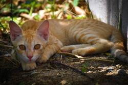 CAT KITTEN FELINE CATSLEEP CATEYES