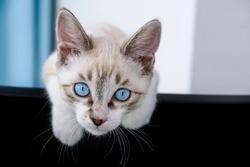 Cat kitten hanging over black blank poster or board