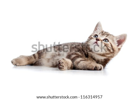 cat kitten lying on floor