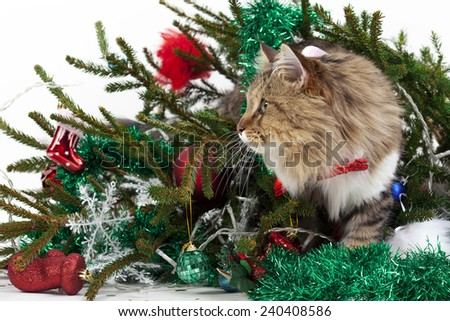 Cat knocked over the tree