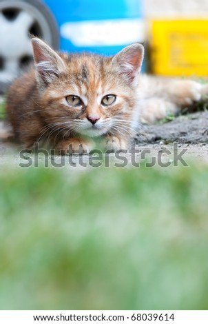 Cat laying on land
