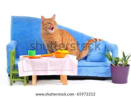 Cat Licking itself after a Meal on a cozy sofa