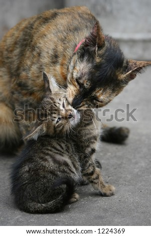 Cat licking kitten