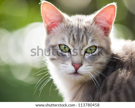 Cat Looking At Camera
