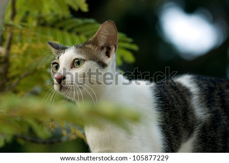Cat looking at something ears up