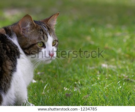 Cat looking in grass