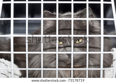 Cat looking out of transport box